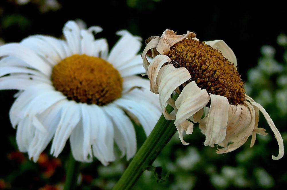 """фото """"Last moments"""" метки: природа, макро и крупный план, цветы"""