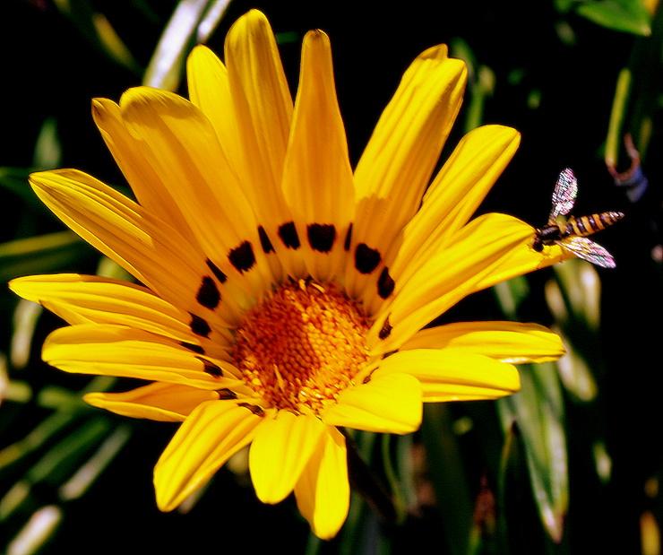 "фото ""Who is the imitator?"" метки: природа, цветы"