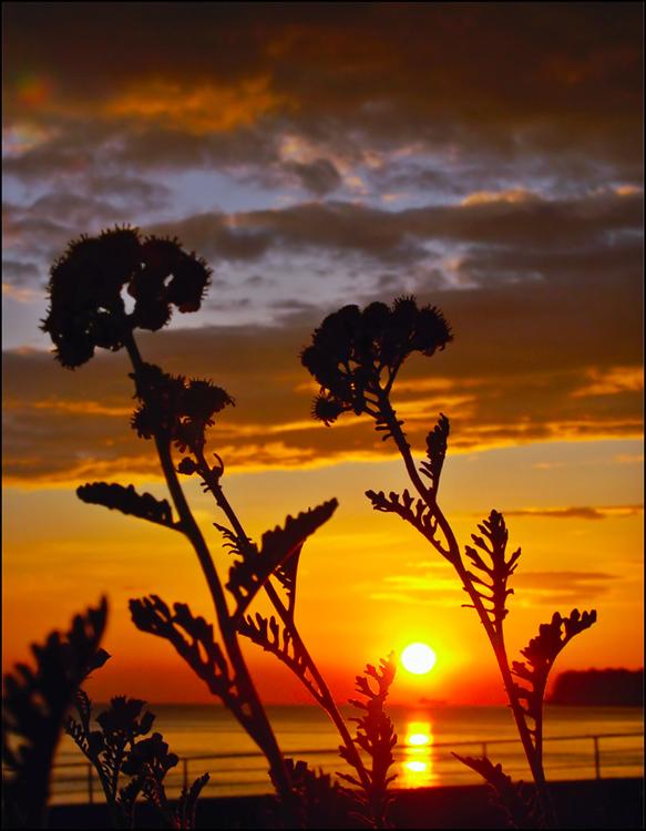 """фото """"In dance of gold colors"""" метки: пейзаж, закат, лето"""