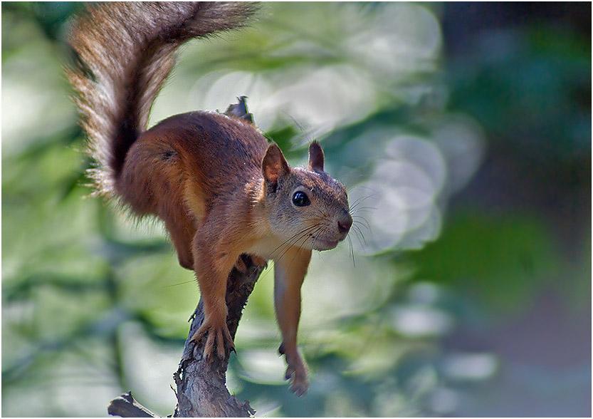 """фото """"Дикий"""" метки: природа, дикие животные"""