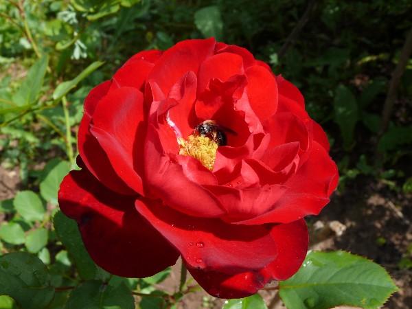 """фото """"Колыбелька"""" метки: природа, цветы"""
