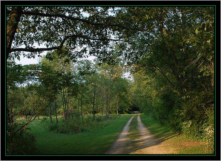 """фото """"Country Road"""" метки: пейзаж, лето"""