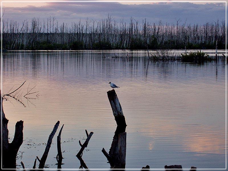 """фото """"..."""" метки: пейзаж, природа, вода, дикие животные"""