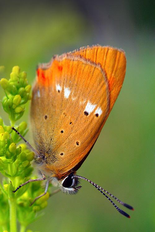 "фото ""* * *"" метки: природа, насекомое"