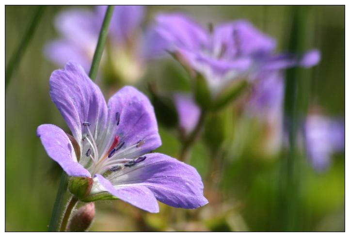 "фото ""Reflection?"" метки: природа, цветы"