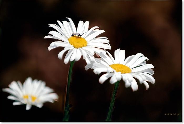 """фото """"Summer Flowers"""" метки: пейзаж, природа, лето, цветы"""