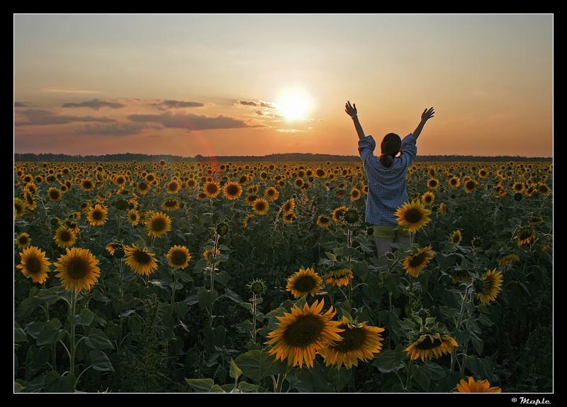 "фото ""Прощанье"" метки: пейзаж, закат"