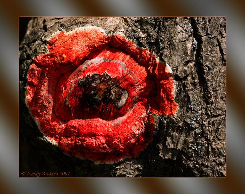 """фото """"Рисуем мелом на коре"""" метки: фотомонтаж, природа, цветы"""