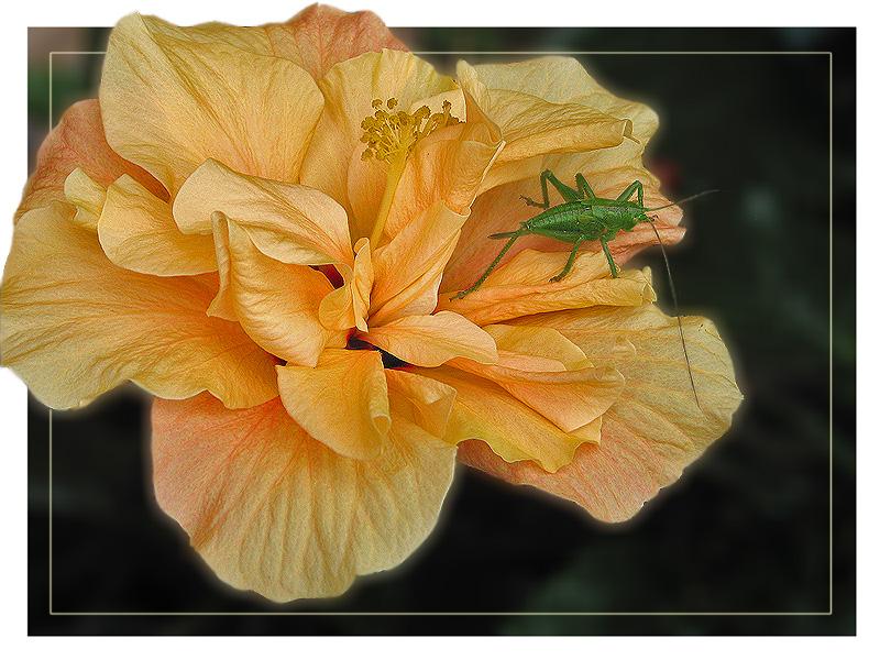 """фото """"Orange And Green"""" метки: природа, насекомое, цветы"""