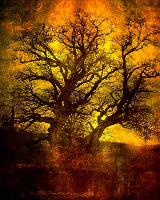 "фото ""Red oak"" метки: пейзаж,"