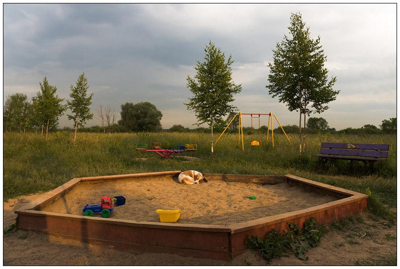 """фото """"Забытые игрушки"""" метки: природа, пейзаж, домашние животные, лето"""