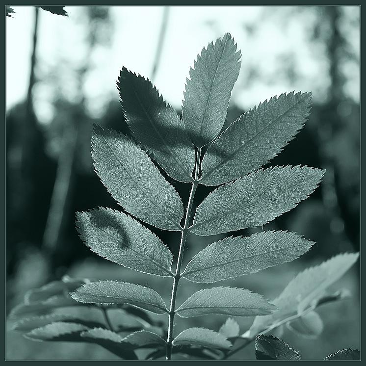 """фото """"Green simplicity"""" метки: природа, цветы"""