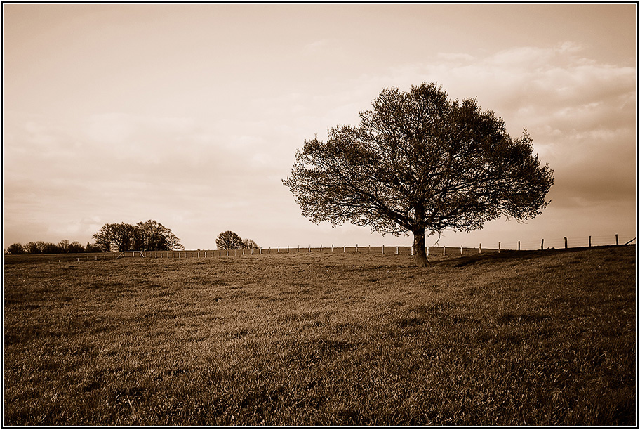 "фото ""0703194899_05"" метки: природа, черно-белые,"
