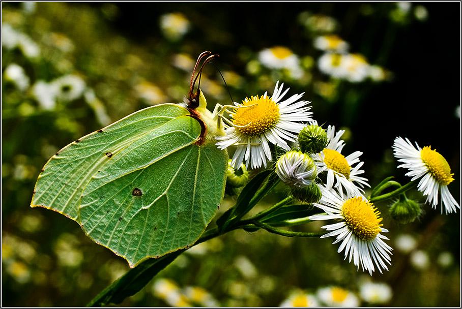 """фото """"*-*"""" метки: макро и крупный план, природа, насекомое"""