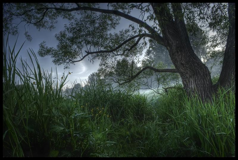 """фото """"Баллада Утренних Трав..."""" метки: пейзаж, природа,"""