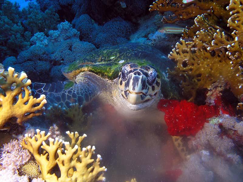 """фото """"Дисерт"""" метки: подводные,"""