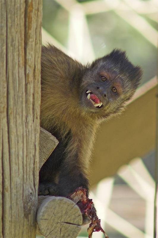 """фото """"Страшилка"""" метки: природа, дикие животные"""