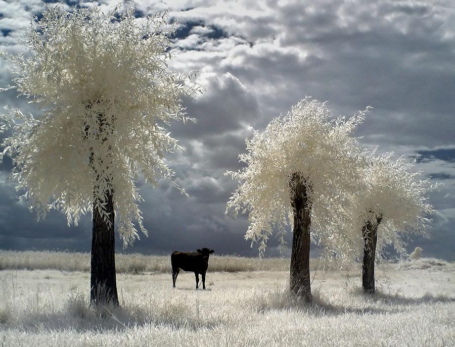 """фото """"ZX 17"""" метки: пейзаж,"""