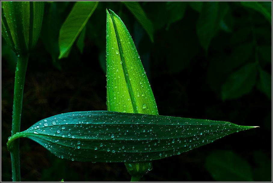 """фото """"Лилия"""" метки: природа, макро и крупный план, цветы"""