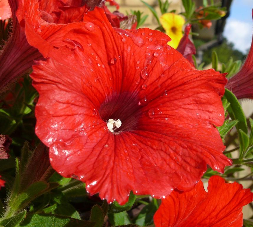 "фото ""After the rain ....."" метки: природа, цветы"