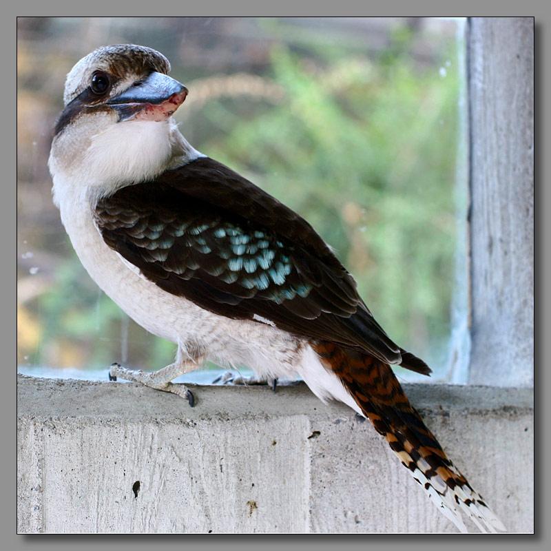 """фото """"Птиц:)"""" метки: природа, макро и крупный план, дикие животные"""