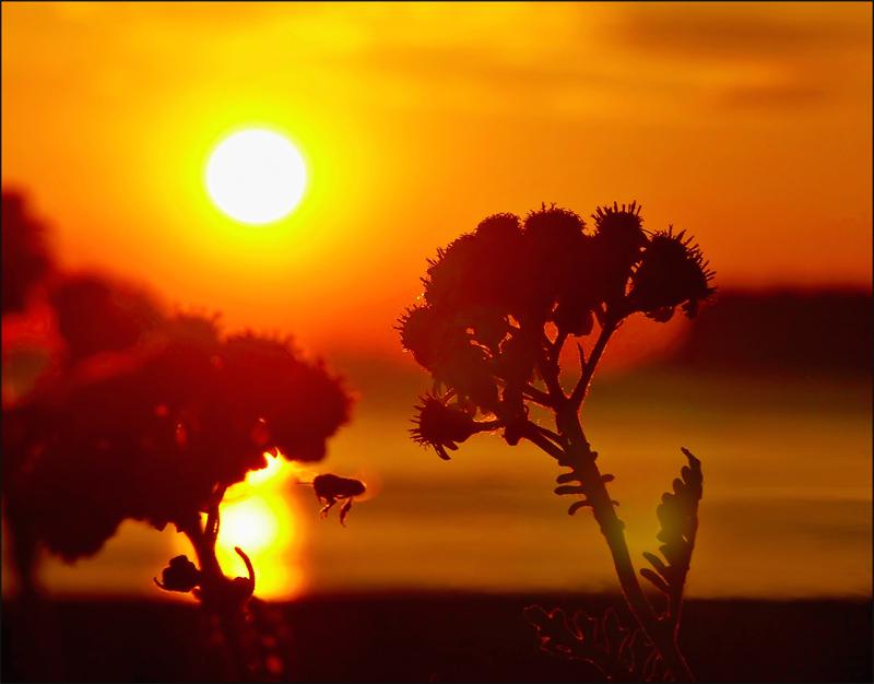 "фото ""Flying at sunset"" метки: пейзаж, природа, закат, цветы"