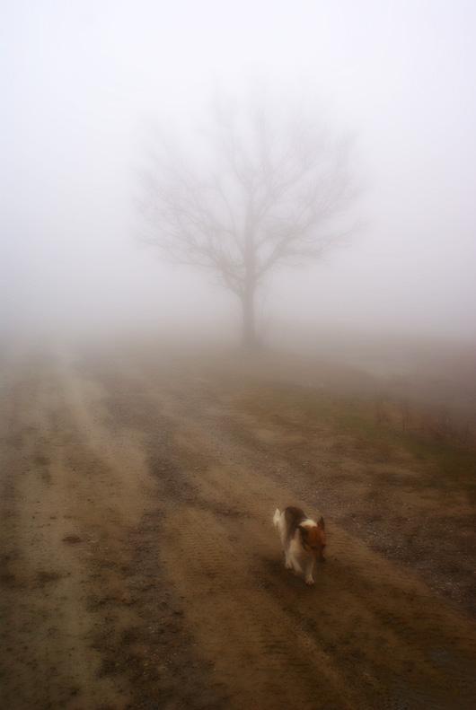 """фото """"Путешествие"""" метки: пейзаж, природа, домашние животные, лес"""