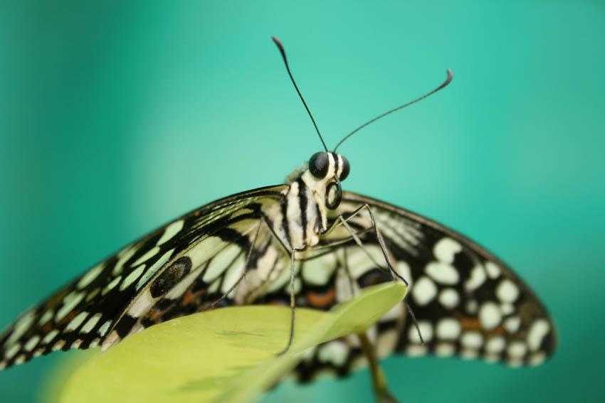 """фото """"Butterfly"""" метки: макро и крупный план, природа, насекомое"""