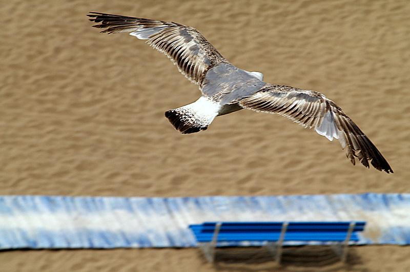 """фото """"FREEDOM..."""" метки: природа, дикие животные"""