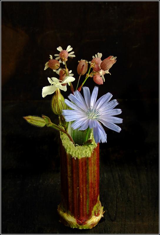 """фото """"Mini"""" метки: природа, макро и крупный план, цветы"""
