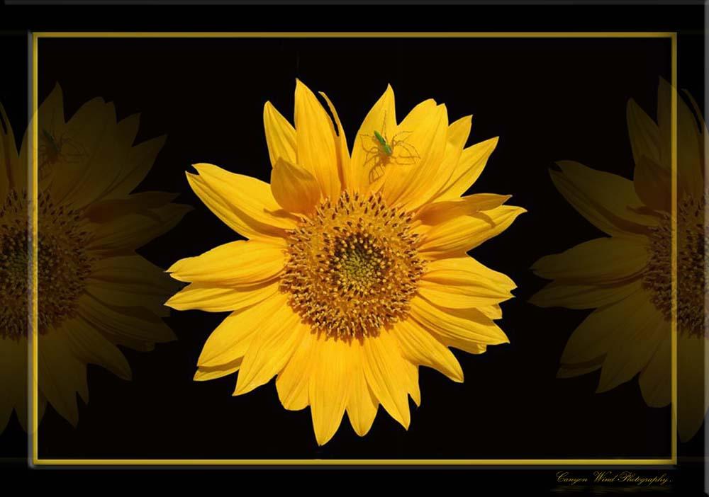 "фото ""Sunshine on my shoulders !"" метки: природа, цветы"