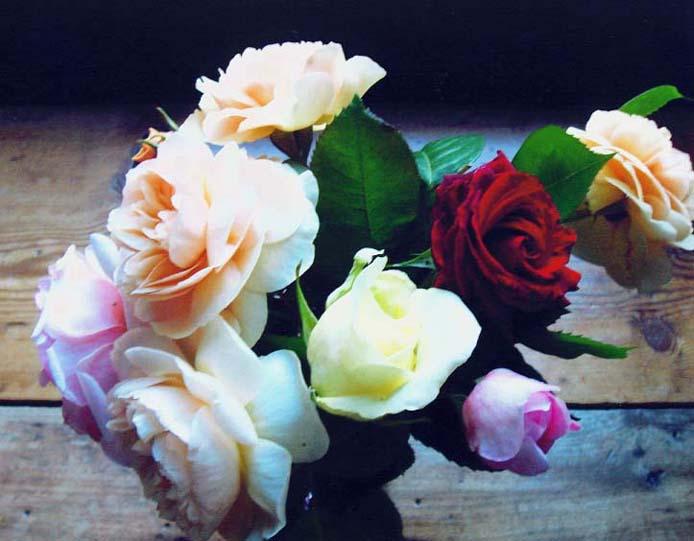 "фото ""Happy Birthday Alisa. 5th July."" метки: природа, цветы"
