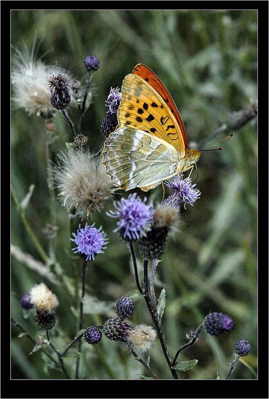 """фото """"* * *"""" метки: природа, макро и крупный план, насекомое"""