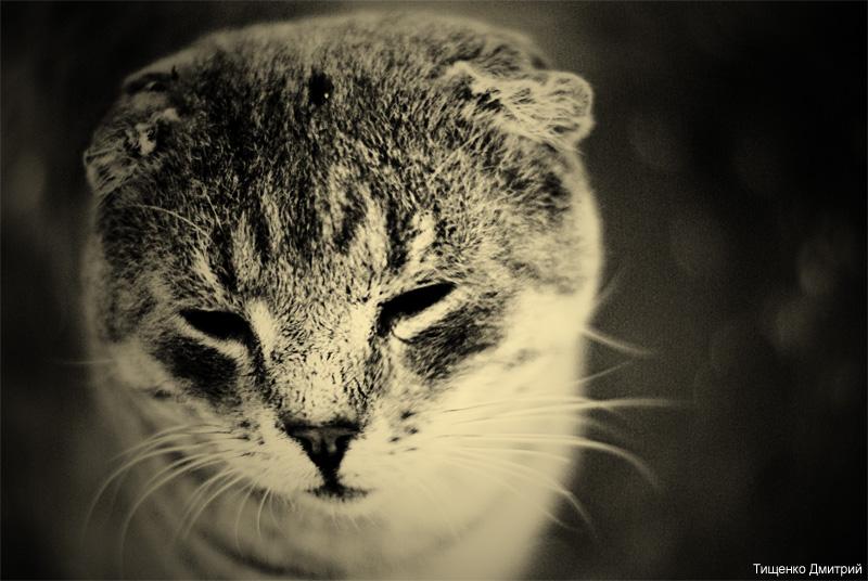 """фото """"Котейка"""" метки: природа, черно-белые, домашние животные"""