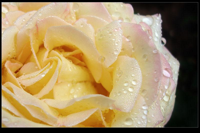 """фото """"Утром - 2"""" метки: природа, макро и крупный план, цветы"""
