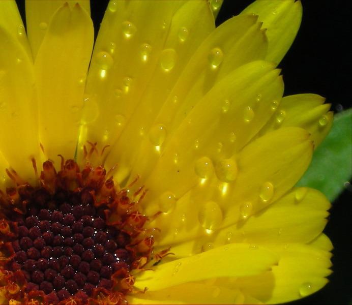 """фото """"Солнечные капельки"""" метки: природа, цветы"""