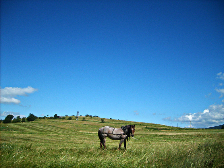 """фото """"***"""" метки: пейзаж, горы, лето"""