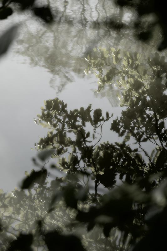 "фото ""...mirror..."" метки: пейзаж, природа, вода, цветы"