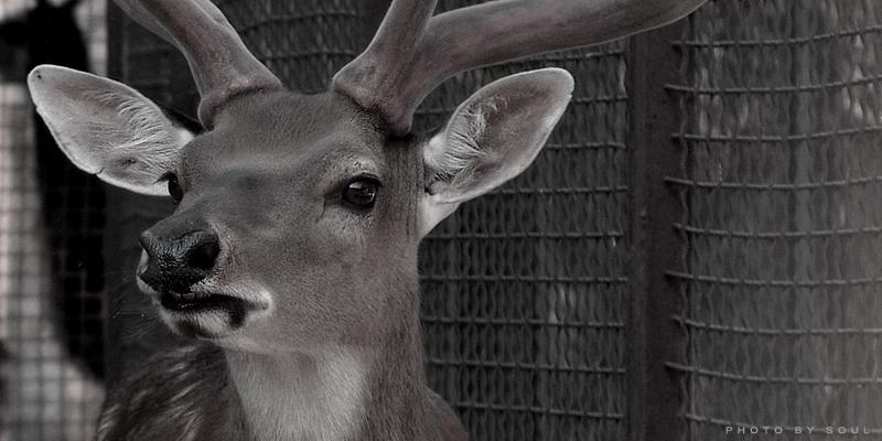 """фото """"*****"""" метки: природа, черно-белые, дикие животные"""