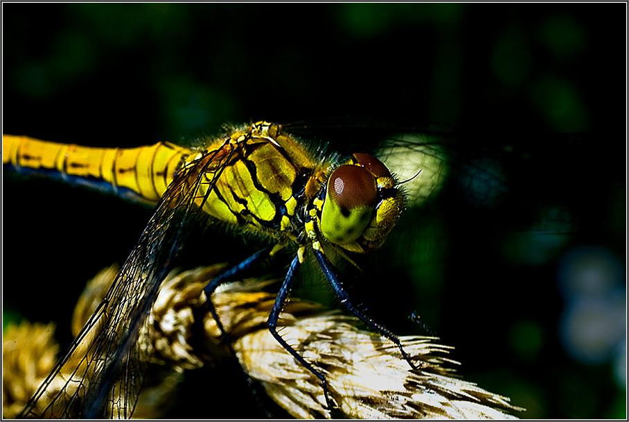 """фото """"**+**"""" метки: макро и крупный план, природа, насекомое"""