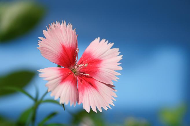 """фото """"#"""" метки: природа, макро и крупный план, цветы"""
