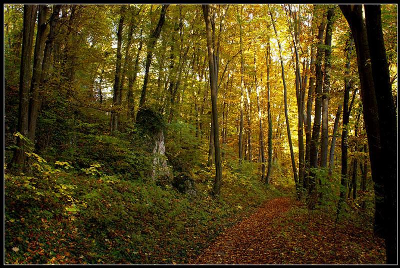 """фото """"Золотая осень."""" метки: природа, пейзаж, осень"""