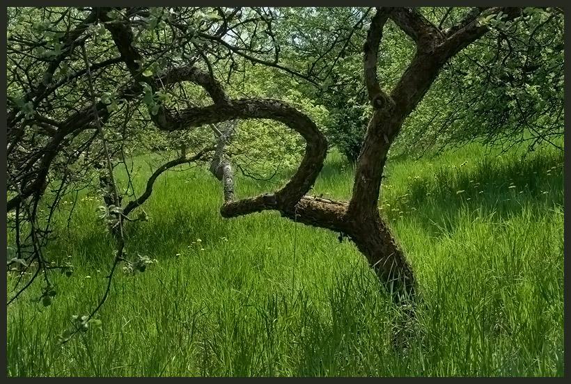 "фото ""Иероглиф."" метки: абстракция, природа, цветы"