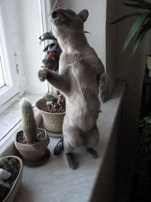 """фото """"amm"""" метки: природа, юмор, домашние животные"""