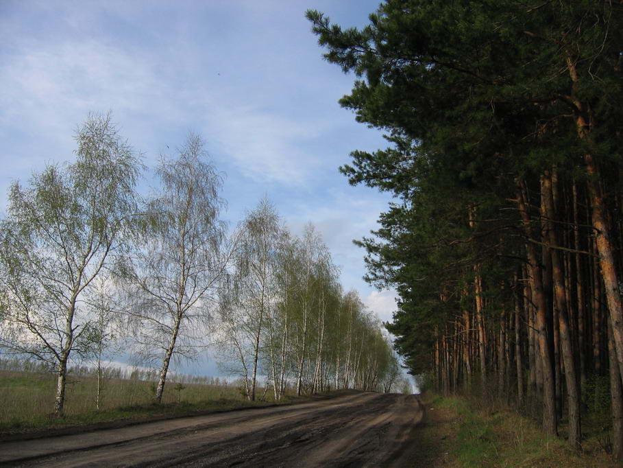 """фото """"Проселок"""" метки: пейзаж, лето"""