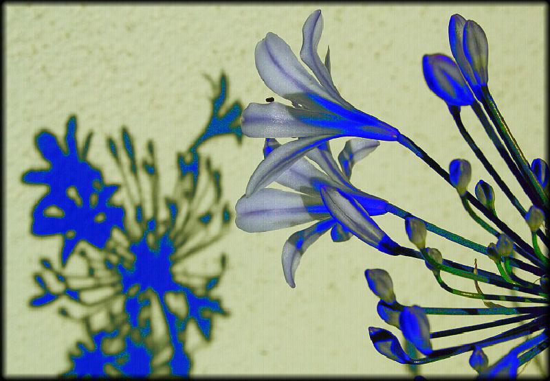 "фото ""Blue Shadow"" метки: природа, фотомонтаж, цветы"