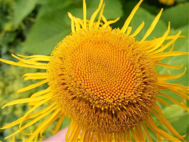 """фото """"Summer flower."""" метки: макро и крупный план,"""