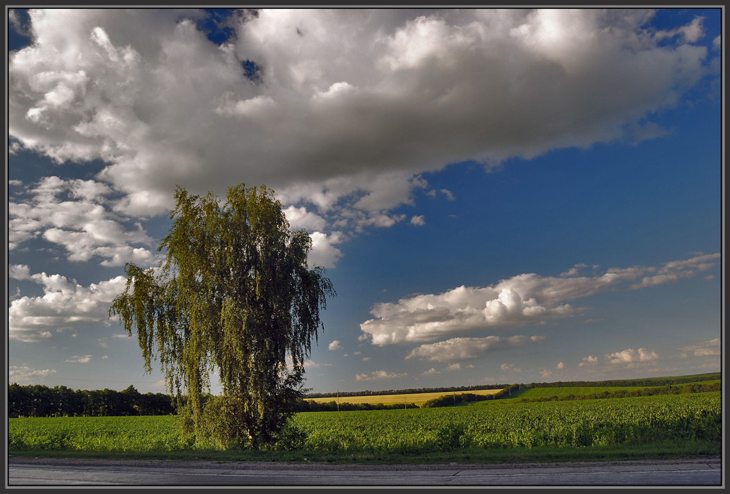 "фото ""Во поле берёзка стояла"" метки: пейзаж,"