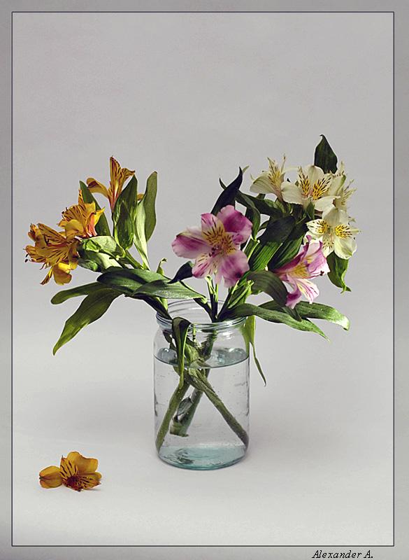 """фото """"Berenice, Happy Birthday!"""" метки: природа, цветы"""