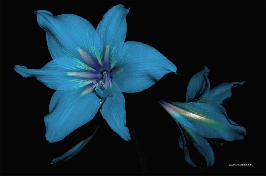 """фото """"KOLOR"""" метки: природа, цветы"""